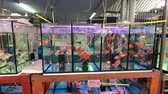 sightseeing : Bangkok, Thailand - March 11, 2017 : Aquarium fish in fishmarket at Chatuchak Weekend Market