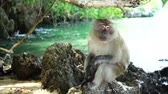 primát : Monkey on the beach in Thailand