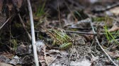 differenciál fókusz : Medium shot of a frog in a forest, Tobermory, Ontario, Canada