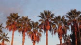 palm trees against blue sky Stockvideo