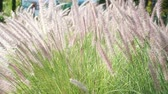 Abstracts nature closeup- Grass flower in the summer Stock Footage
