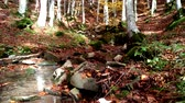 buk : Beautiful stream in the autumn forest