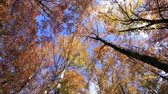 тосканский : Autumn branches against the blue sky in the autumn season