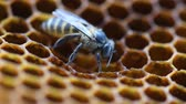 assassino : Bee Hive for background.