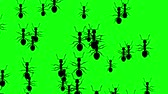 entomologia : Invasion of hordes of ants. Crowd of creepy insects runs on green chroma key, black silhouettes fill the screen and turn into a black backdrop, 3D animation.