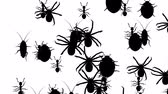 hexapod : Invasion of hordes of arthropods. Crowd of creepy creatures runs on a white background, black silhouettes fill the screen and turn into a black backdrop, 3D animation. Stock Footage