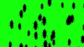 hexapod : Invasion of hordes of cockroaches. Crowd of creepy insects runs on green chroma key, black silhouettes fill the screen and turn into a black backdrop, 3D animation.