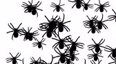 korku : Invasion of hordes of spiders. Crowd of creepy arthropods runs on a white background, black silhouettes fill the screen and turn into a black backdrop, 3D animation. Stok Video