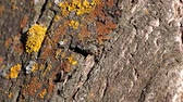 rind : lichen and moss on the bark of the old tree