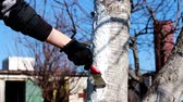 кора : painting a tree trunk