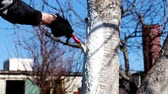 odolný : painting a tree trunk