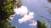 esquerda : Timelapse of clouds moving on blue sky between trees