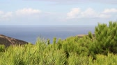 View over green conifers and green landscape towards the Atlantic ocean with blue sky and clouds