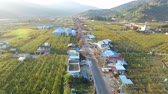 груши : Aerial View of Pear Farm Street in Hadong, Gyeongnam, South Korea, Asia