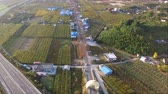 pereira : Aerial View of Pear Farm Street in Hadong, Gyeongnam, South Korea, Asia