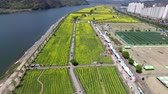 coréia : Aerial View of Yuchae Canola Flower Festival in Namji, Changnyeong, Gyeongnam, South Korea, Asia.