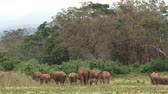 male animal : The back of many elephants heading towards a forest