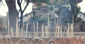incenso : Close-up of incense sticks burning with smoke in buddhist temple