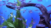biyoçeşitlilik : Colorful aquarium, showing different fishes swimming. Beautiful background of the underwater world.
