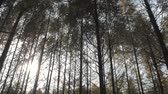 Walking between tall trees in mixed forest on sunny autumn day, blue sky on the background Vídeos