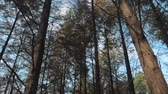 buk : Walking between tall trees in mixed forest on sunny autumn day, blue sky on the background Dostupné videozáznamy
