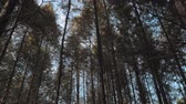 Walking between tall trees in mixed forest on sunny autumn day, blue sky on the background 動画素材