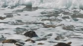 renk : The waves crashing against the rock on the sea shore Stok Video
