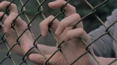 Close-up view of young mans hands shaking metal mesh at fenced area. Helpless man shaking a metal fence trying to escape.