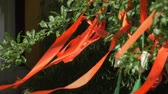 添付する : Suzhou, China - October 10, 2018: Close-up of red wish stripes ribbons waving from a tree in a chinese temple garden 動画素材