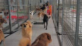 ladrão : Suzhou, China - April 13, 2019: Unwanted and homeless dogs of different breeds in animal shelter. Looking and waiting for people to come adopt. Shelter for animals concept