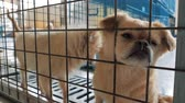 štěně : Sad dogs in shelter behind fence waiting to be rescued and adopted to new home. Shelter for animals concept