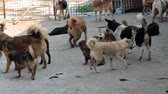 ladrão : Different mixed breed dogs behind the fences. Dogs in a shelter or an animal nursery. Shelter for animals concept.