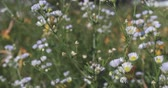vibrante : Close view of colorful wildflowers blowing in the wind on a summer day.