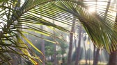 urlop : Sun shining through the palm tree leave in tropical India