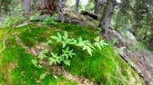 urlop : Green plant in mountain forest in Dzungarian Alatau,  Kazakhstan, Central Asia