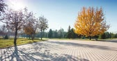cień : Big autumn oak near the road at the park of first president in 4k timelapse in Almaty, Kazakhstan