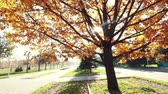coroa : Big autumn oak near the road at the park of first president in Almaty, Kazakhstan Stock Footage