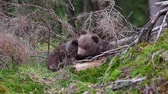Two bear cubs in forest