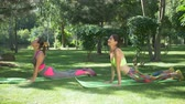 facing : Pretty smiling active fitness women in sportswear practicing yoga on exercise mats, standing in upward facing dog posture in summer park. Lovely females working out together in nature. Slo mo. Stock Footage