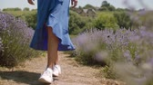 Low section of carefree trendy woman in blue dress stepping slowly on dusty footpath through lavender field on summer day. Female legs walking through fragrant lavender bushes during outdoor leisure.
