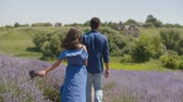 Charming mixed race couple in love holding hands walking through fragrant lavender blossoms while enjoying summer vacations in countryside. Positive young people relaxing in beautiful nature. Stockvideo