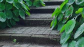 английский : Rustic Steps With Green Plants Dolly Стоковые видеозаписи