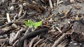 plântula : Green Plant Among Dead Wood Dolly Stock Footage