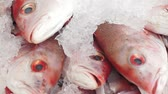 caro : Fish Market Red Fish Heads Dolly