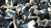 queimado : Close up panning shot of many charred bones that were incinerated in a fire after disposal of the remains.