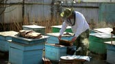 cera de abelha : The beekeeper inspection control framework in apiary with bee honey