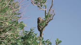 opice : Macaque Monkey Seen in Nusa Penida Indonesia