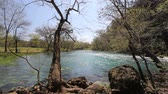 forest : missouri current river through trees at big spring Stock Footage