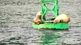 final : Sea Lions Slumber Ocean Buoy Reserrection Bay Sea Wildlife Vídeos