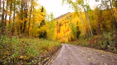 scene : Primitive Gravel Road Leads on Autumn Fall Foliage Alaska